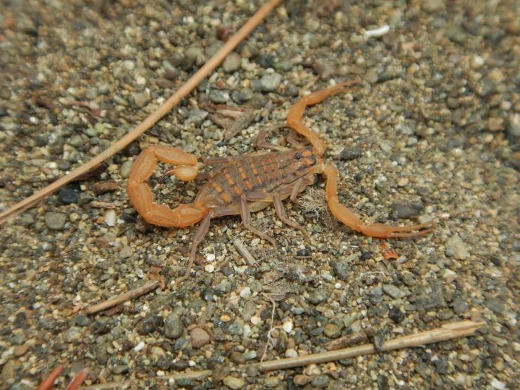 Scorpion!!!